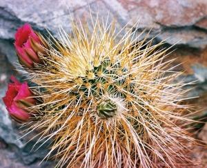 Spiny prickly!