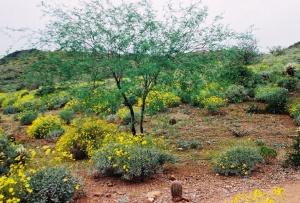 It's a verdant desert!