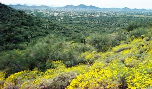 Cave Creek Looking South to Phoenix