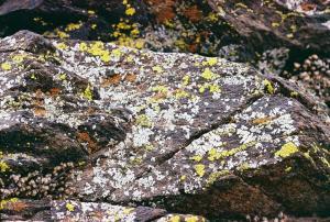 More lichens!